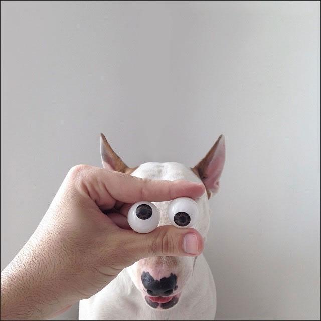 perro-ojos